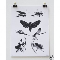Insects Plate by LOUIS LPS