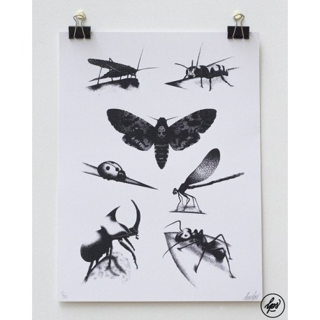 Affiche Insects Plate by LOUIS LPS