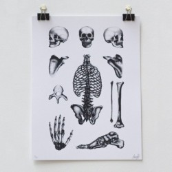 Affiche Bones Plate by LOUIS LPS