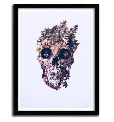 Affiche metamorphosis par ALI GULEC