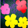 Print Flowers 11.65 by Andy Warhol